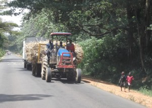 Tractor taking sugarcane to the nearby factor where many work for less than $1 per day.
