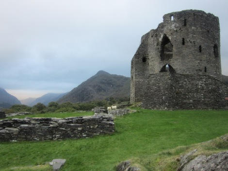 Sheep by the ruins of Dolbadarn Castle